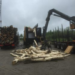 Debarked logs by AJP Rotary Debarker.2
